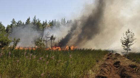 Чрезвычайную пожароопасность объявили в 11 районах Воронежской области