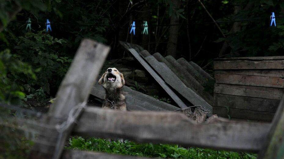 Приют для бездомных животных в Воронеже построят на Холмистой