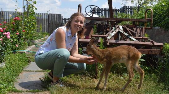 Найденного в лесу олененка передали в Воронежский зоопитомник
