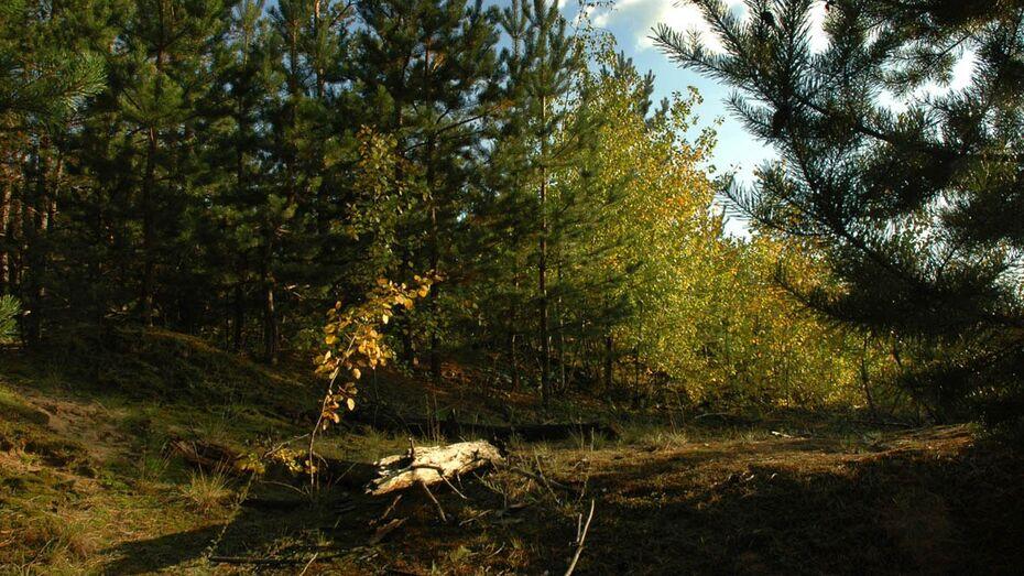 Пропавший в лесу воронежский пенсионер нашелся живым