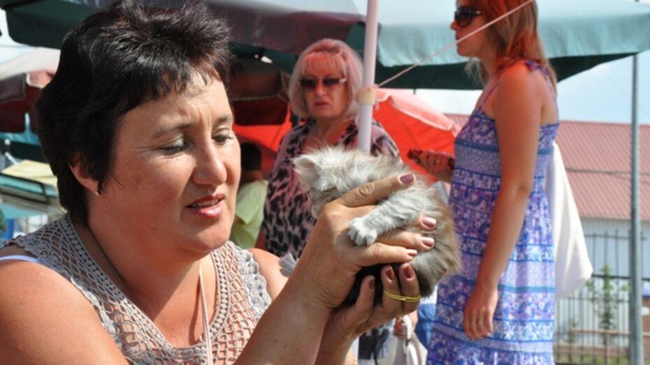 Павловская женщина-предприниматель стала «крестной матерью» для ищущих дом котят