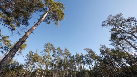 Воронежской области придется найти дополнительные 30 млн рублей на лес