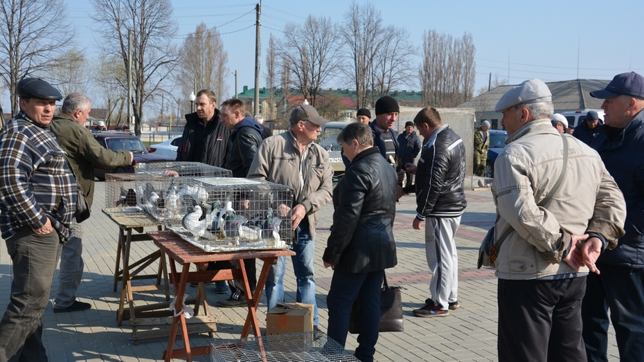 В Поворино пройдет ярмарка-фестиваль «Летите, голуби, летите...»