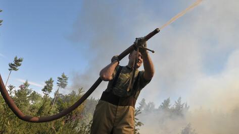 Природный заповедник горит в Воронежской области