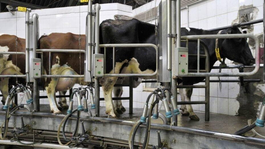 В Воронежской области построят молочный комплекс на 1,2 тыс голов
