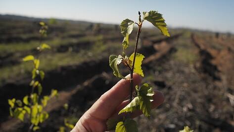 В Репьевском районе весной появится Лес Победы