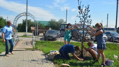 В Воробьевке для молодоженов установили кованое дерево с яблоками и скворечником