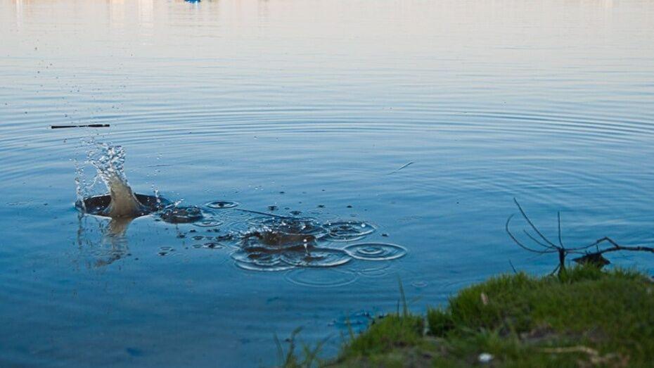 Глава ГУ МВД Воронежской области предложил запретить массовые акции у водоемов
