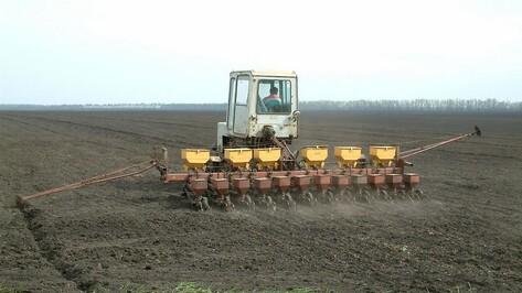 В Воронежской области сев яровых затянулся из-за обильных дождей