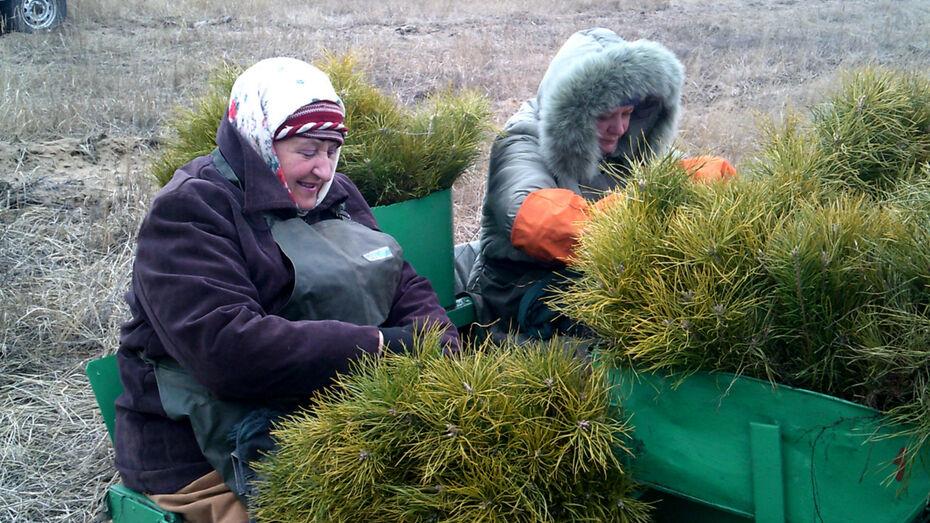 В Воронежской области появятся 1,6 тыс га новых лесов