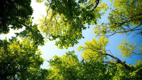 Торги на создание парка за 187 млн рублей в воронежской «Экодеревне» объявили заново