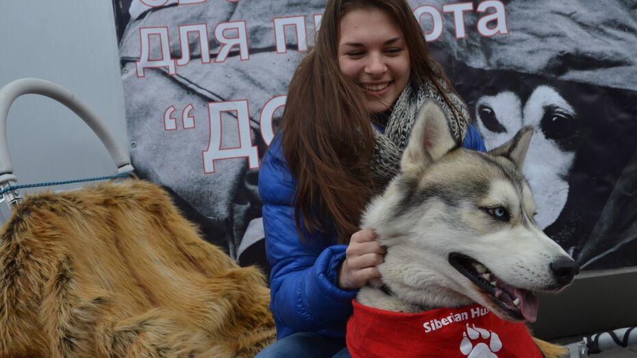 Воронежские зоозащитники развернут палатку помощи у памятника Биму