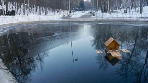 Зимующей на пруду в Воронежском центральном парке утке подарили дом