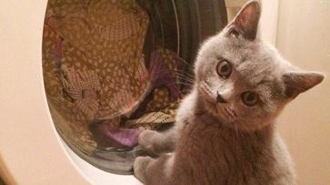 Прокуратура заинтересовалась роликом со «стиркой» кота в машинке