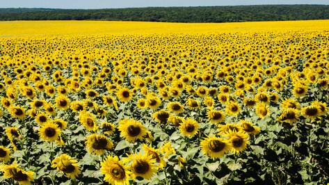 Лето-2019 в Воронежской области будет долгим и теплым