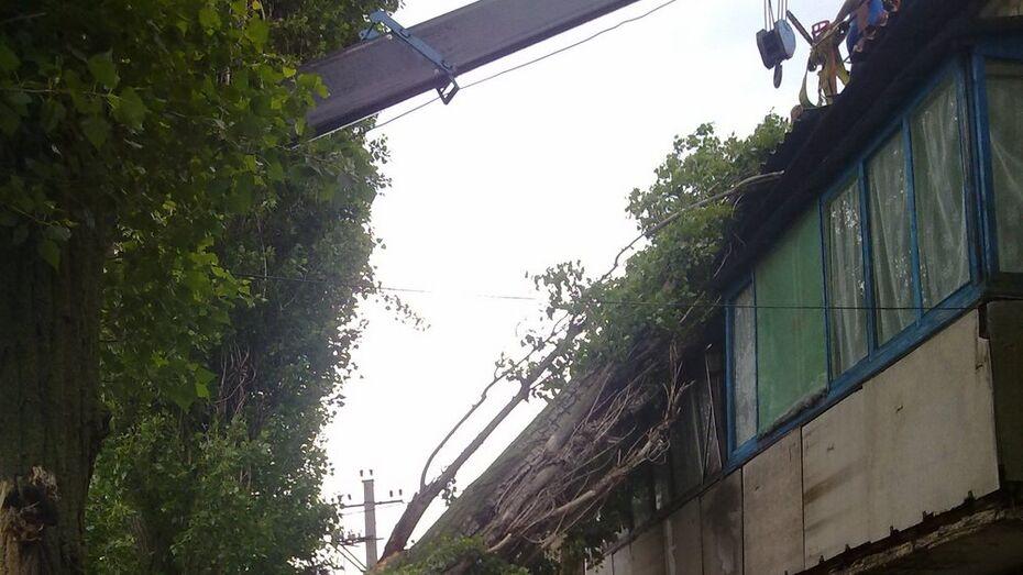 В Поворино на многоэтажку упал полусухой тополь