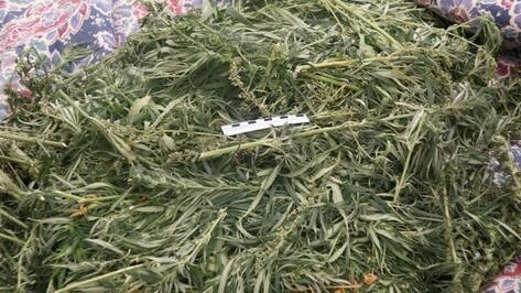 У жителя Воронежской области нашли 2 кг марихуаны