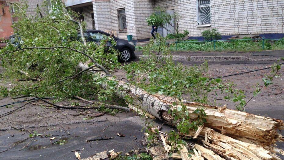 Ветер повалил в Воронеже 10 деревьев за день