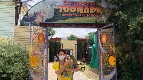 На самоизоляции воронежцы перевели зоопарку 500 тыс рублей