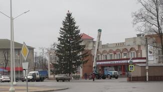 Жительница Боброва подарила городу 17-метровую новогоднюю елку