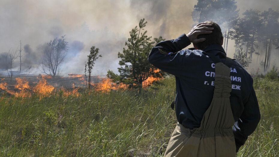 Один из трех масштабных природных пожаров локализовали в Воронежской области