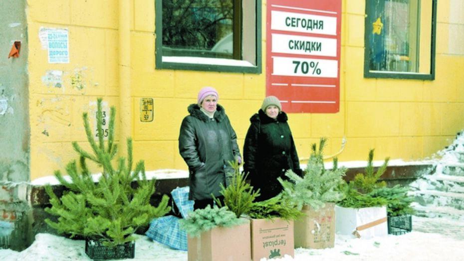 На елочных базарах Воронежа продают «левые» деревья