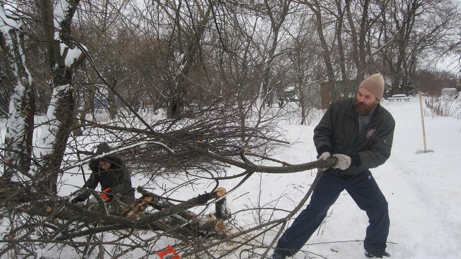 Воронежцы будут рубить деревья в усадьбе в Семилукском райне