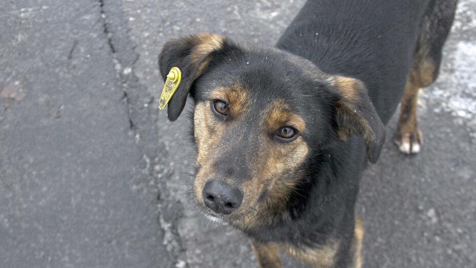 Жители воронежского ЖК создали петицию об их защите от бродячих собак