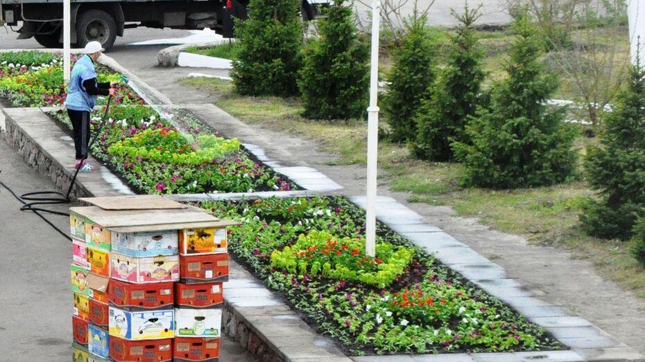 В Репьевке высадили 30 тыс корней цветов
