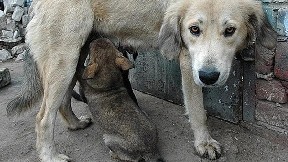 Власти Воронежа выделят участок под строительство приюта для бездомных животных