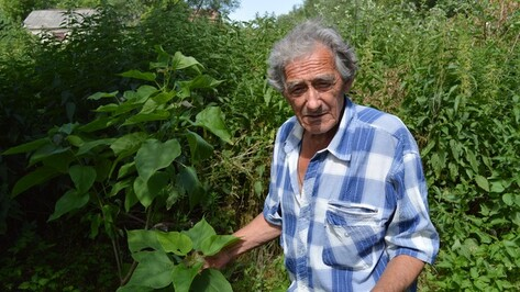 Рамонский пенсионер по своей инициативе озеленяет берег реки Воронеж