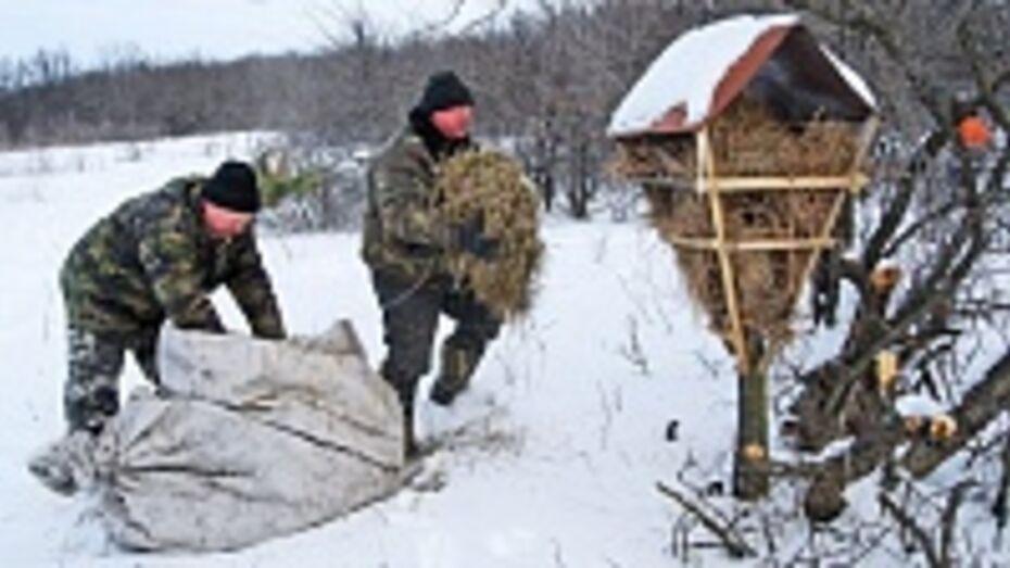 Бутурлиновские охотоведы за зиму скормят косулям и кабанам 10 тонн зерна и 2 тысячи веников