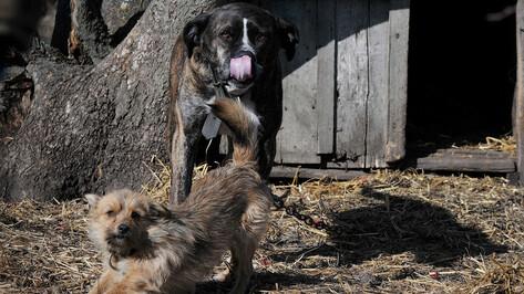 Депутаты приняли закон, позволяющий построить приют для бродячих собак в Воронеже