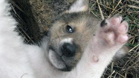 Воронежцев попросили помочь собакам из приютов