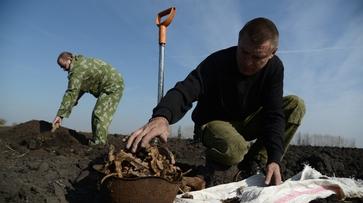 История от РИА «Воронеж». Как воронежский поисковик восстанавливает историю войны