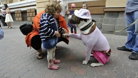 Главной звездой карнавального шествия в Воронеже стал бульдог в розовой юбке