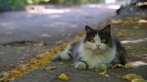 Воронежская УК подарит скидку на «коммуналку» взявшим кошку из приюта