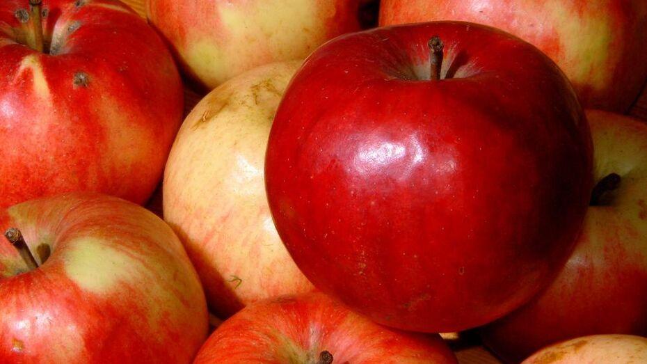 Воронежцев позвали искать «Антоновские яблоки»