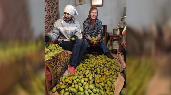 Супруги из Терновки собрали с одного дерева 60 кг груш