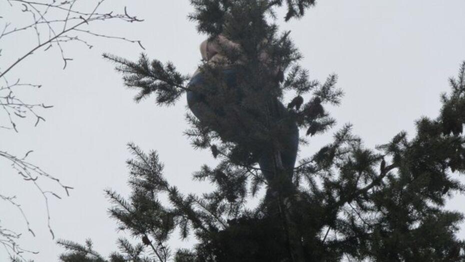 В Воронеже женщина 8 марта оказалась на дереве