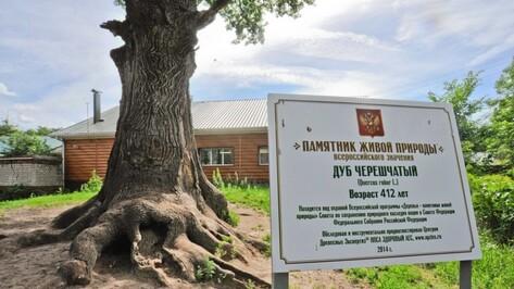 В Воронежской области деревья-памятники подготовили к зиме