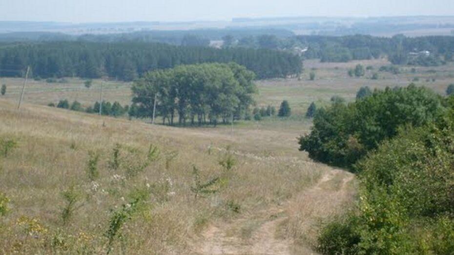 Жители Терновского района нашли в лесу труп женщины