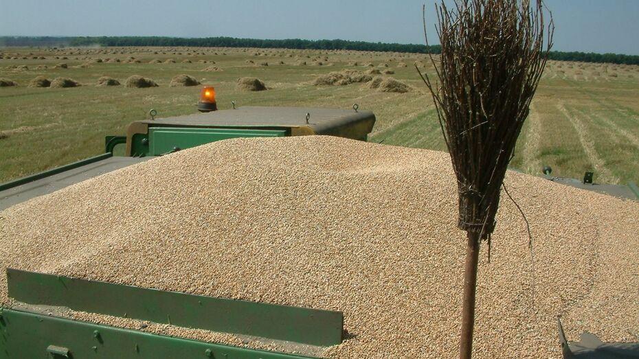В Воронежской области уборку зерновых отложили на 2 недели из-за непогоды
