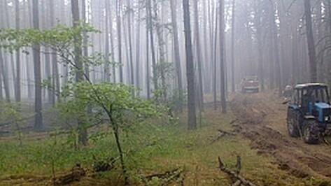 В истории о пожаре в Воронежском заповеднике появилась версия поджога