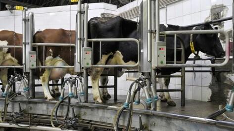 Молочный комплекс на 2,8 тыс голов запустят в Воронежской области в декабре 2016 года