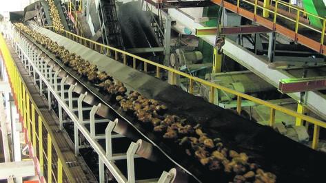 Над крупным сахарным заводом в Аннинском районе нависла угроза закрытия