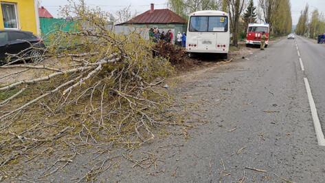 Число пострадавших в ДТП с маршруткой в Воронеже выросло до 7 человек
