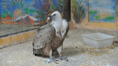 Птиц в Воронежском зоопарке поселят в новых вольерах