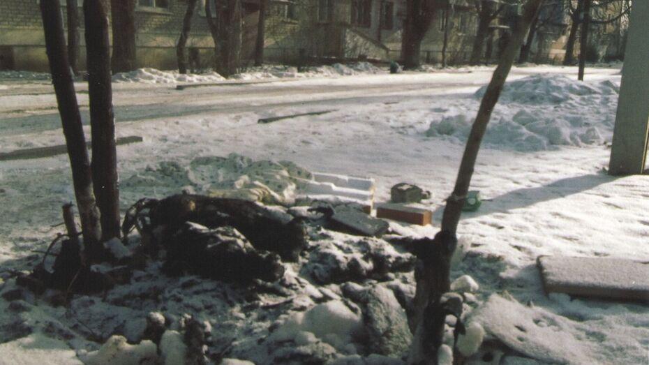 В Семилуках неизвестные заживо сожгли в будке трех собак