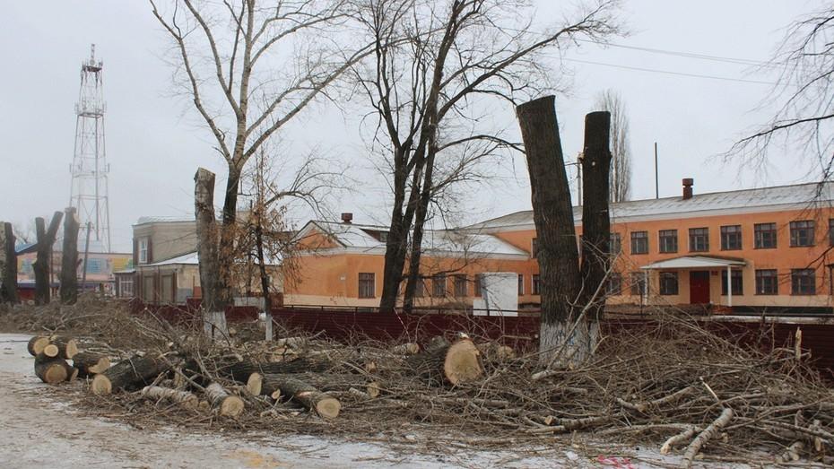 В Таловой выпилили все аварийные деревья
